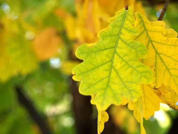 Green on Yellow, Yellow on Green