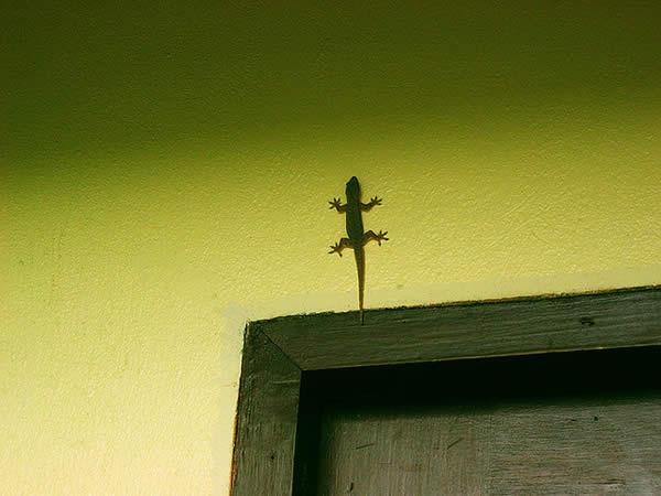 Tiny Lizard
