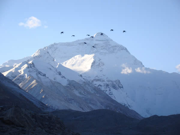 Birds Taking Flight in Front of Mount Everest