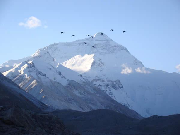 Birds Taking Flight in Front of Mount Everest
