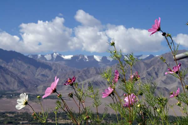 Himalayan nature