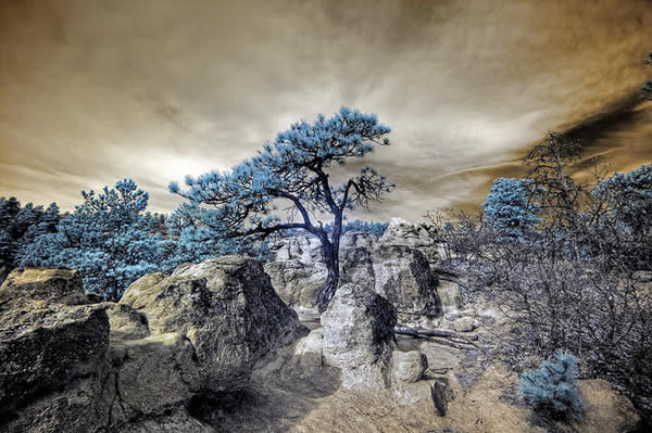 Infrared HDR Palmer Park Colorado Springs