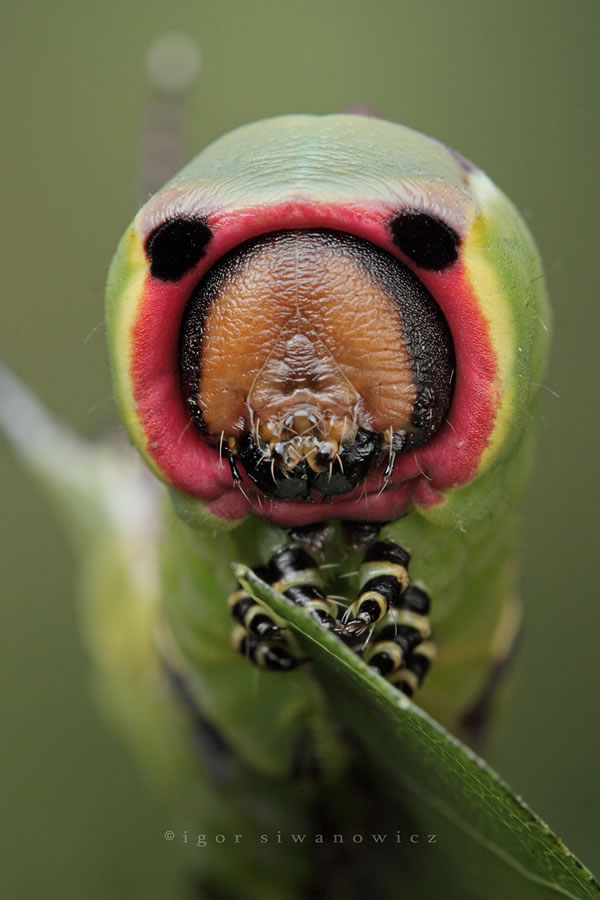 100 Extremely Detailed Macro Insect Photos – Photoshop and photography galleries