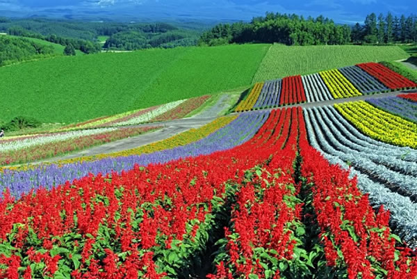 Flowerfields, Biei, Hokkaido, Japan