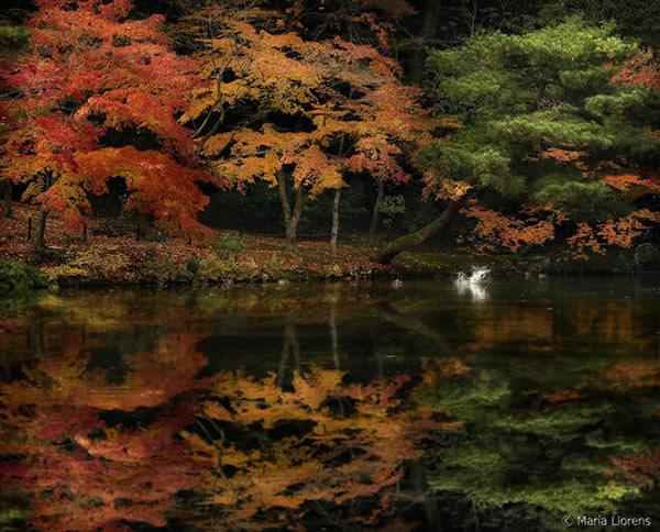 Kioto. Japan Colors