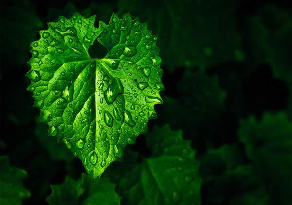 Metallic Leaf