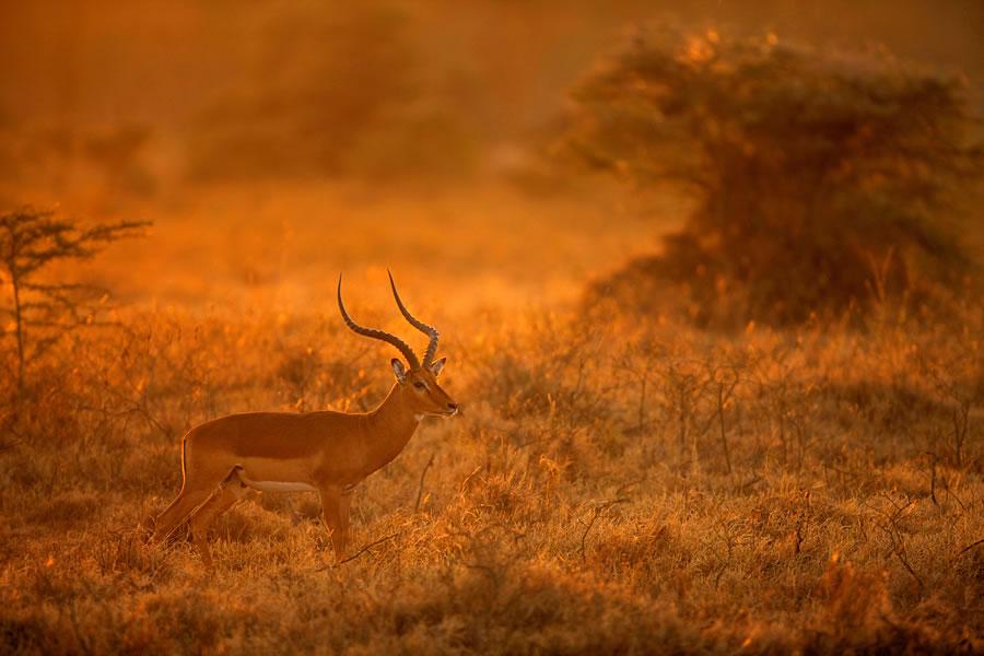 Kenya kenya
