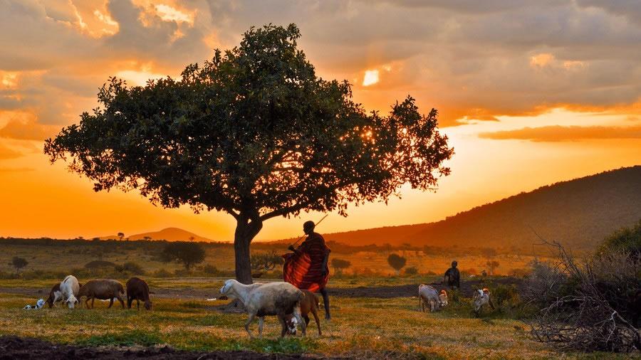 Maasai Goatherd
