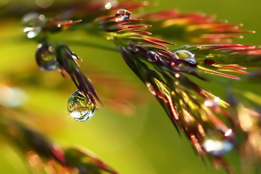 Rain Jewels