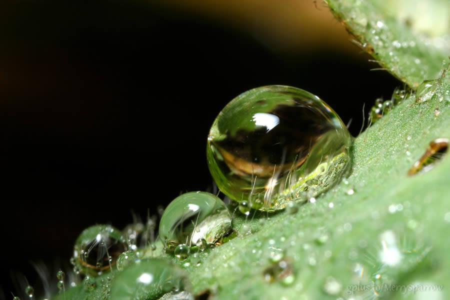 Green Waterdrops