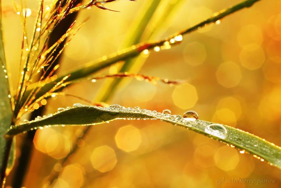 Glimpse of Golden Morning