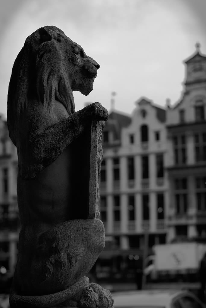 Lion watching Brussels