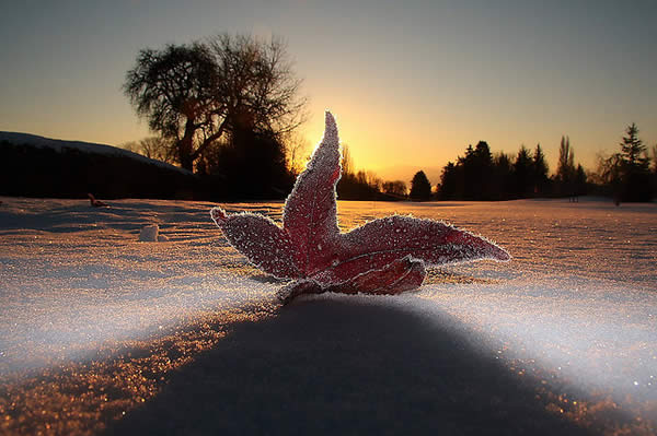 Leaf on a Frosty Morning