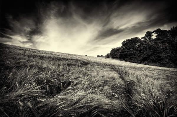 Flowing Fields