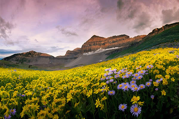 Timpanogos Wildflowers