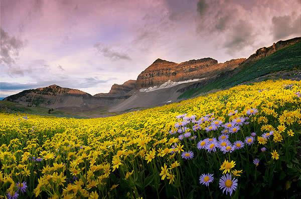 Timpanogos Wildflowers