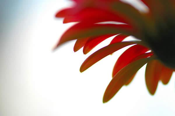 A Daydream in Red