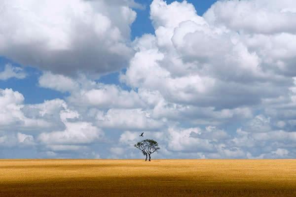 Eagle Tree