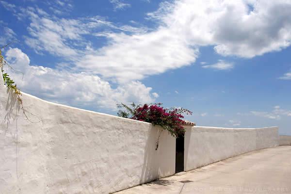 Bougainvillea On White Wall