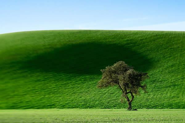 La Cuesta Tree