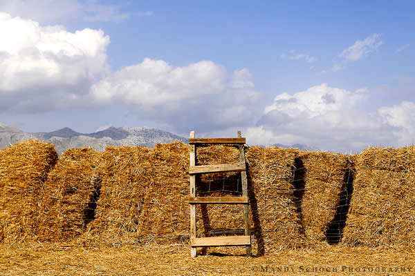 Hay Ladder