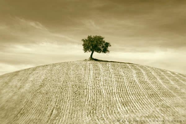 The Sepia Tree