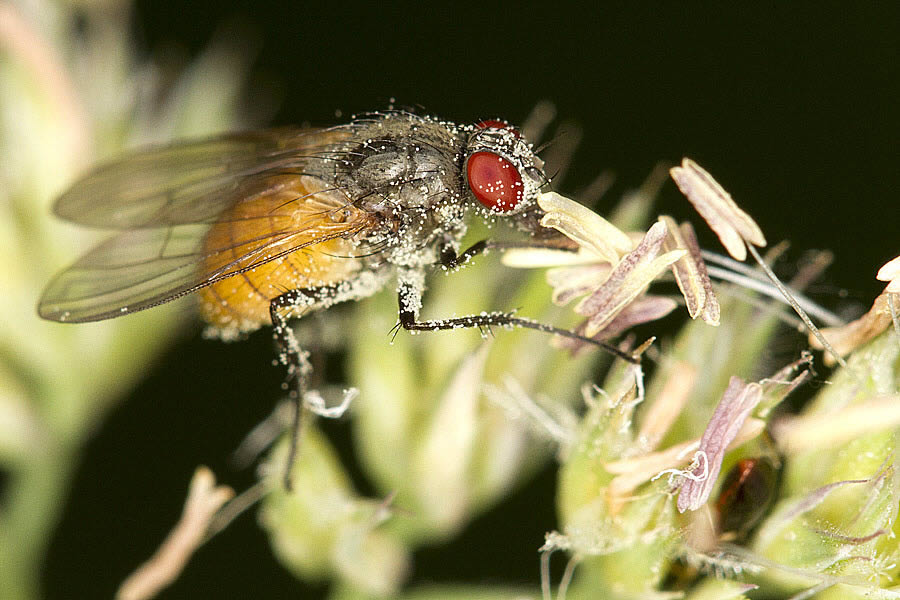 Insekter 1