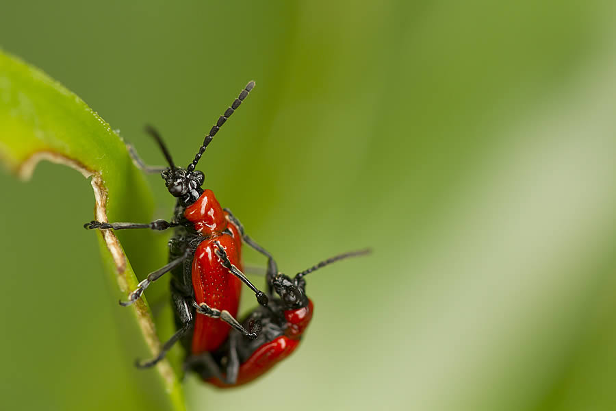 Insekter 2