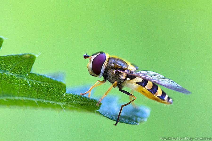 Insekter 3