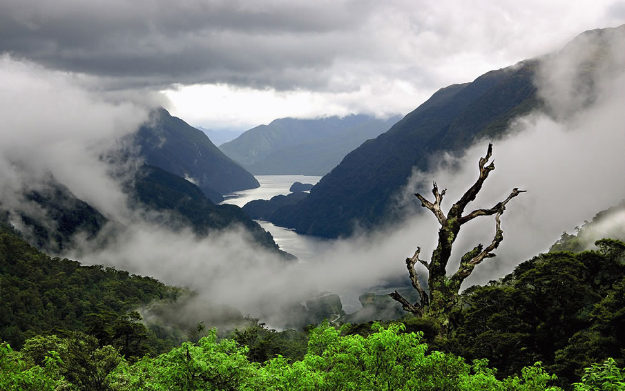 New Zealand Fog Mountains