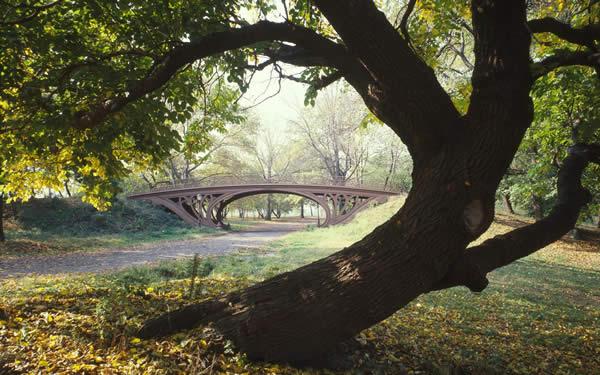 Gothic Bridge - Central Park