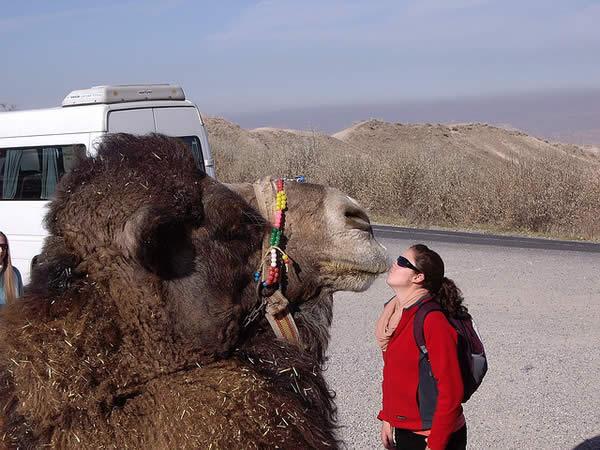 Camel Kisser