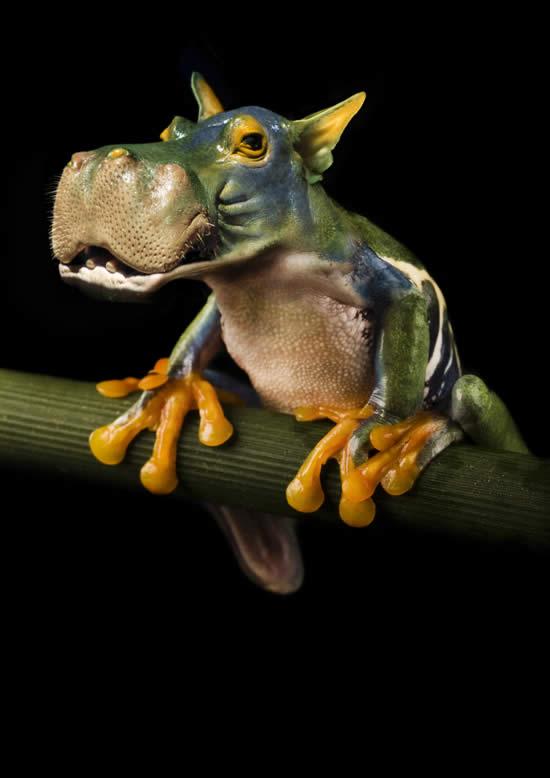 Hippo Frog