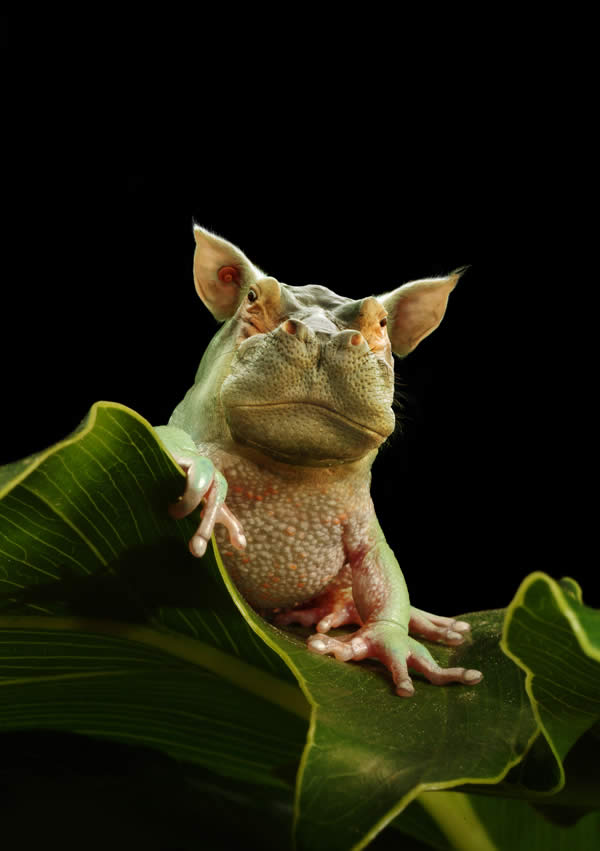 Frog Hippo