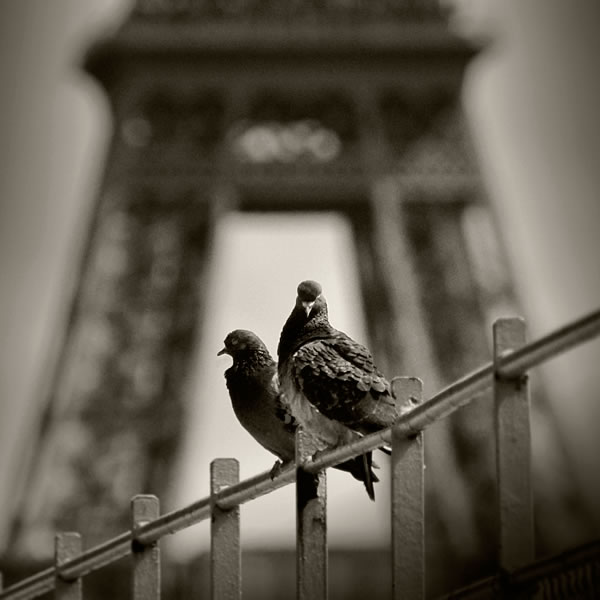 Two Doves and the Eiffel Tower