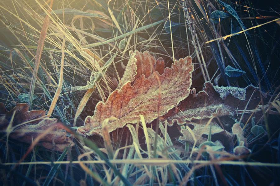 Hot Leaf