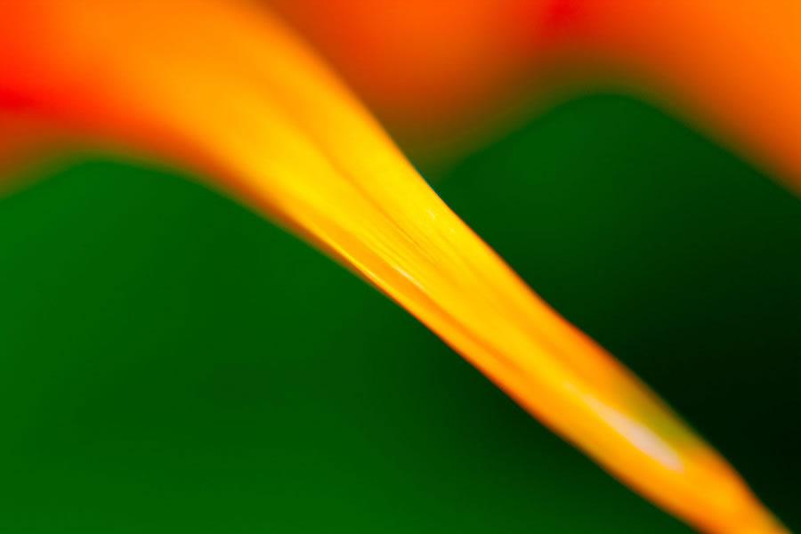 Ember Leaf