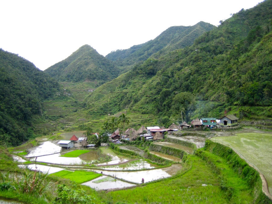 Rice Field Village