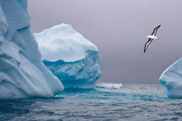 Iceberg and Albatross