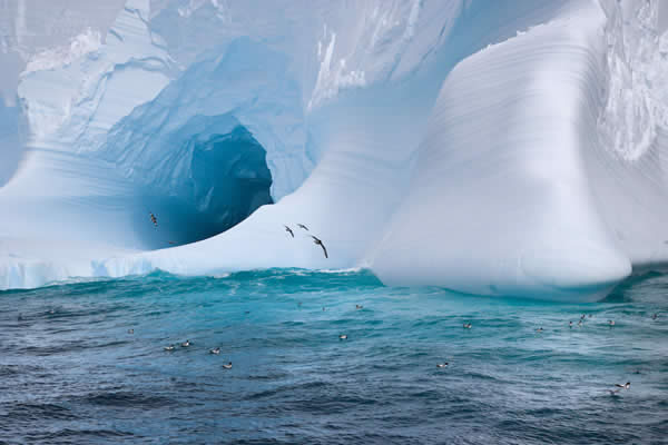 Iceberg and Sea Birds