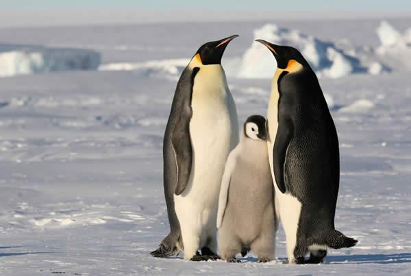 Antarctica, November 2007