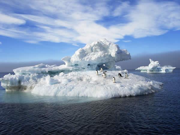 Antarctica - Adelie Penguins
