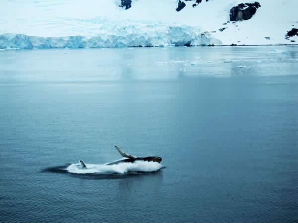 Neko Harbour, Andvord Bay, Antarctica