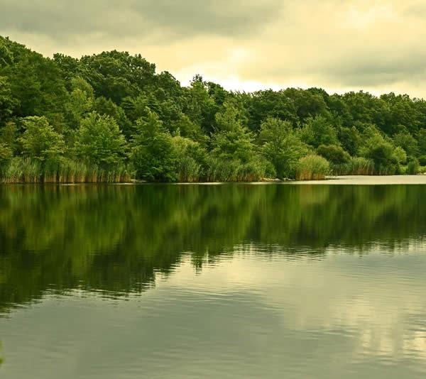 Gorgeous Green Reflection