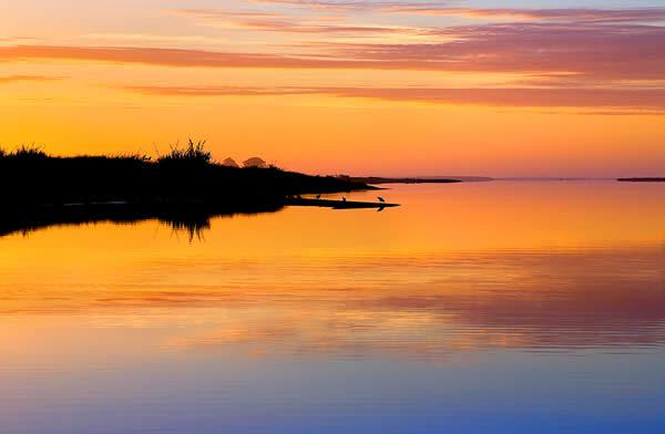 Evening in the Wetlands