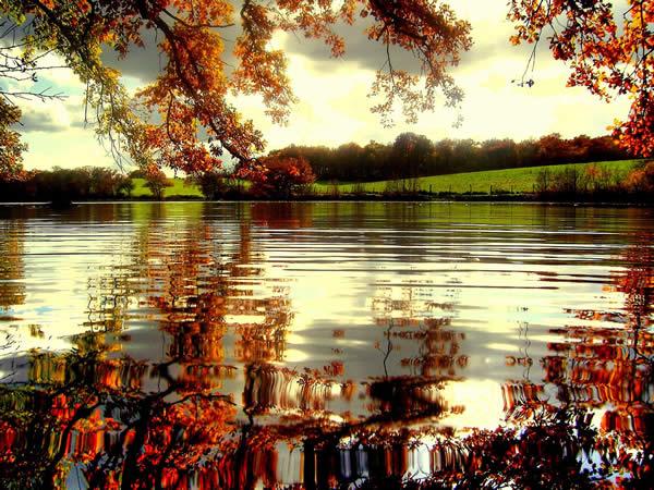 Seasonal Reflection
