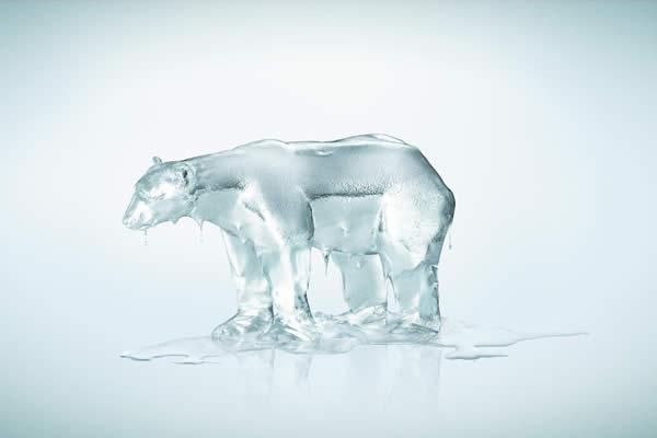 Melting Polar Bear