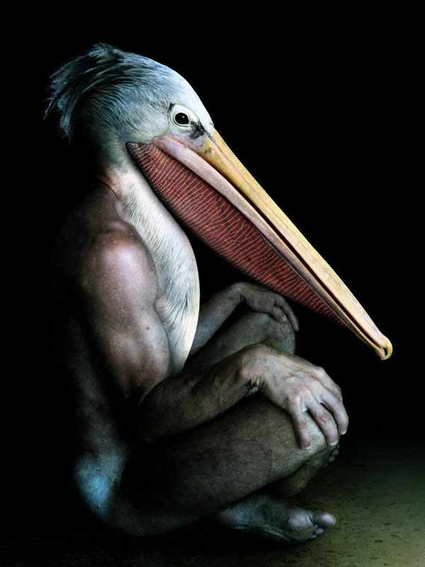 Pelikan Man
