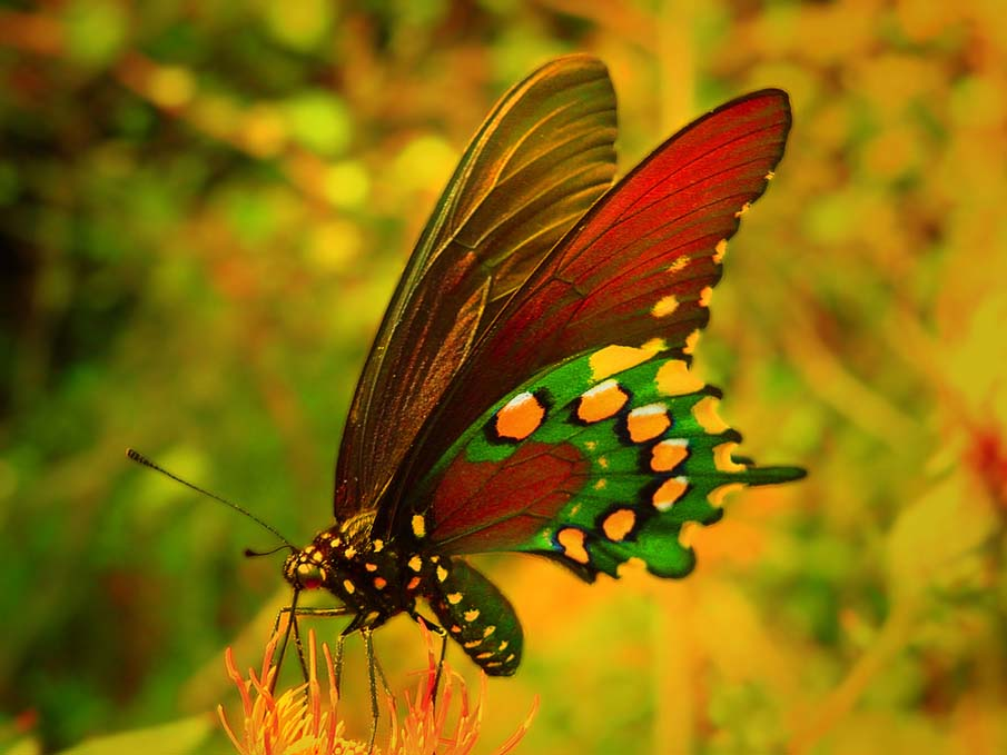 50 Fascinating Close Up Photos Of Colorful Butterflies