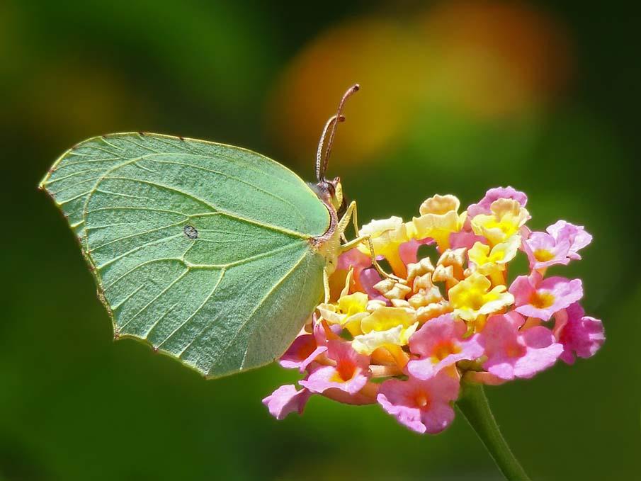 The Butterfly Garden 1